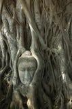 Testa del Buddha nell'albero Fotografia Stock Libera da Diritti