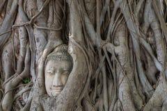 Testa del Buddha nella radice dell'albero Ayutthaya thailand Fotografia Stock