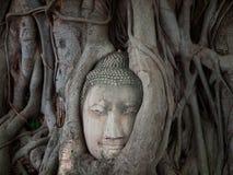 Testa del Buddha nella radice dell'albero thailand immagine stock