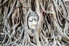 Testa del Buddha nelle radici dell'albero Fotografia Stock
