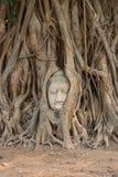 Testa del Buddha nelle radici dell'albero Immagini Stock