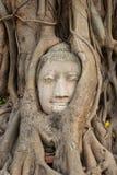 Testa del Buddha nelle radici dell'albero Immagine Stock Libera da Diritti