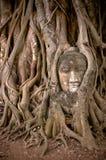 Testa del Buddha nelle radici dell'albero di banyan Immagini Stock