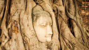 Testa del Buddha nelle radici dell'albero - tempio Tailandia Immagine Stock