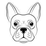 Testa del bulldog francese isolata su fondo bianco Immagine Stock Libera da Diritti