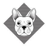 Testa del bulldog francese su fondo bianco Immagine Stock Libera da Diritti