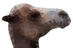 Testa del cammello, illustrazione di vettore Fotografie Stock Libere da Diritti