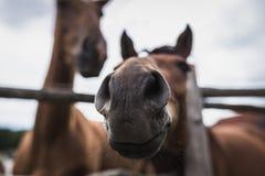 Testa del cavallo Immagine Stock