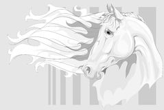 Testa del cavallo bianco Immagini Stock Libere da Diritti