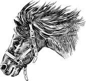 Testa del cavallo corrente Immagini Stock Libere da Diritti