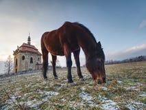 Testa del cavallo dettagliatamente Chiuda sulla vista fotografia stock libera da diritti