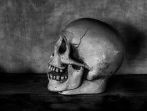 Testa del cranio fotografia stock libera da diritti