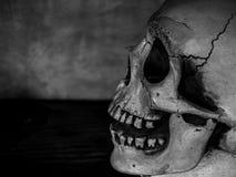 Testa del cranio immagini stock