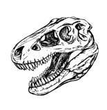 Testa del dinosauro del cranio del turex royalty illustrazione gratis