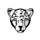 Testa del ghepardo Immagine Stock