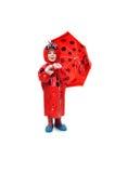 Testa del Ladybug alla punta Fotografia Stock
