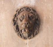 Testa del leone Fotografia Stock