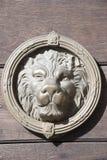 Testa del leone fotografie stock libere da diritti