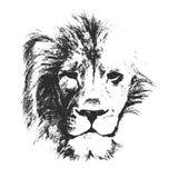 Testa del leone Disegnato a mano Illustrazione di vettore Fotografia Stock Libera da Diritti