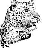 Testa del leopardo Immagini Stock Libere da Diritti