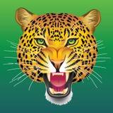 Testa del leopardo Fotografie Stock