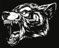 Testa del lupo feroce Immagine Stock