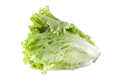 Testa del mazzo di insalata verde fresca isolata Fotografia Stock Libera da Diritti
