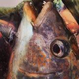 Testa del pesce immagini stock