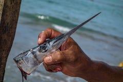 Testa del pesce Fotografia Stock Libera da Diritti