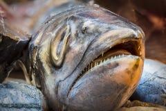 testa del pesce di re Fotografia Stock Libera da Diritti