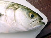 Testa del pesce serra Immagini Stock