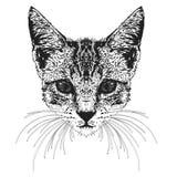 Testa del ` s del gatto Illustrazione di Stock