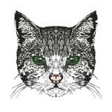 Testa del ` s del gatto Illustrazione di vettore Illustrazione di Stock