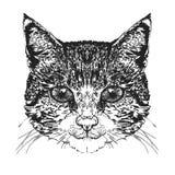 Testa del ` s del gatto Illustrazione di vettore Royalty Illustrazione gratis