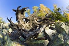 Testa del ` s del drago nelle montagne Fotografia Stock