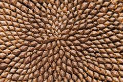 Testa del seme di girasole - particolare Immagini Stock