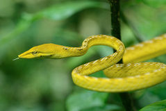 Testa del serpente Fotografie Stock