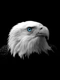 Testa dell'aquila calva fotografie stock libere da diritti