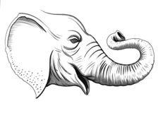 Testa dell'elefante Fotografia Stock Libera da Diritti