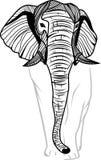 Testa dell'elefante isolata Immagine Stock