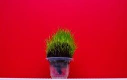 Testa dell'erba Immagini Stock
