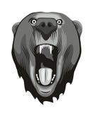 Testa dell'orso Fotografie Stock