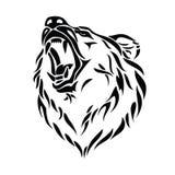 Testa dell'orso dell'orso grigio Immagine Stock