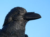 testa dell'uccello Fotografia Stock Libera da Diritti