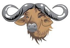 Testa della Buffalo illustrazione vettoriale
