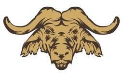 Testa della Buffalo Immagine Stock