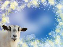 Testa della capra sul fondo blu del bokeh Immagine Stock
