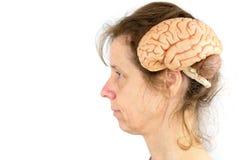 Testa della donna con il modello dei cervelli umani immagini stock libere da diritti