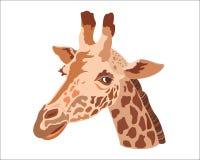 Testa della giraffa su un fondo bianco Immagini Stock Libere da Diritti
