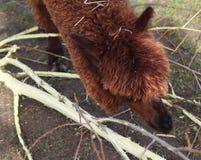 Testa della lama Immagini Stock